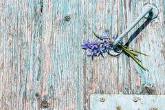 Fond en bois avec éplucher la peinture bleue et les perce-neige bleus Photos libres de droits