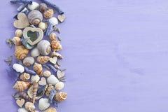Fond en bois avec des coquilles de mer Image stock