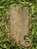 Fond en bois avec des feuilles de l'espace de copie de sel de poivre d'arugula, rouge et noir images stock