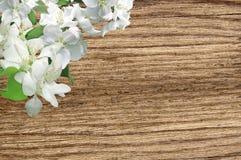Fond en bois avec des fleurs de ressort Fleur d'Apple Photos stock