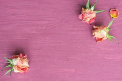 Fond pourpre de roses Photos libres de droits