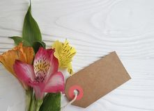 Fond en bois blanc floral de disposition d'été de décoration de fleur d'Alstroemeria, fragilité de cadre photographie stock libre de droits