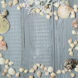 Fond en bois bleu avec de beaux coquillages Copiez l'espace pour le texte Photographie stock libre de droits