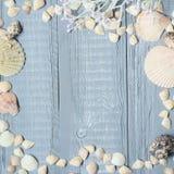Fond en bois bleu avec de beaux coquillages Copiez l'espace pour le texte photo libre de droits