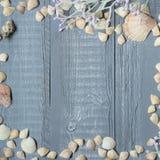 Fond en bois bleu avec des coquillages et des coraux photographie stock libre de droits