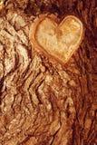 Fond en bois brun de forêt Écorce d'arbre en bois de forêt de texture Photos libres de droits