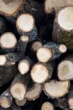 Fond en bois découpé en tranches Image libre de droits