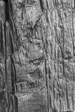 Fond en bois d'écorce. Photo libre de droits