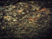 Fond en bois d'écorce d'un arbre Texture abstraite images libres de droits