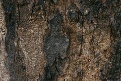 Fond en bois d'abrégé sur texture Images libres de droits