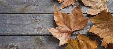Fond en bois d'automne d'automne Photographie stock