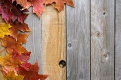 Fond en bois d'Autumn Maple Leaves Framing Rustic Photo libre de droits