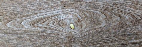 Fond en bois d'Oid, texture Images stock