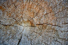 Fond en bois de boucles d'arbre Anneaux de croissance annuels sur un rondin Images stock