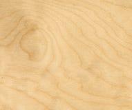 Fond en bois de bouleau Photo libre de droits