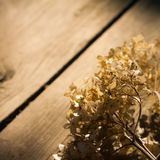 Fond en bois de Brown Photo libre de droits
