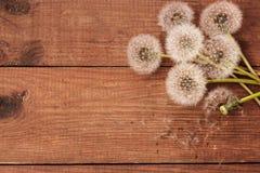 Fond en bois de Brown avec les pissenlits blancs Image libre de droits