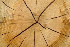Fond en bois de gain Photo libre de droits