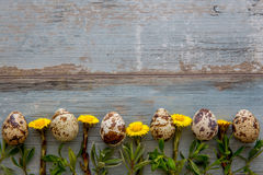 Fond en bois de Pâques de ressort avec des oeufs de caille Photo stock