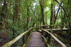 Fond en bois de perspective dans la forêt Photos stock