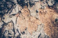 Fond en bois de texture Texture en bois de Brown, image stock