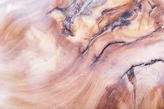fond en bois de texture d'orme dans la macro pousse de lentille images stock