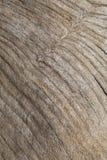 Fond en bois de texture de grain. Photographie stock libre de droits