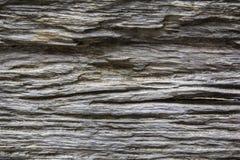 Fond en bois de texture de nature Image libre de droits