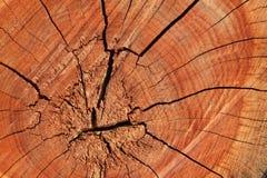 Fond en bois de tranche de texture de cercle Boucles sur un long Images stock