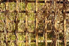 Fond en bois de trellis Photo libre de droits