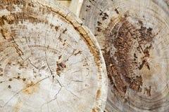 Fond en bois de tronçon de teck Photographie stock libre de droits