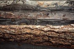 Fond en bois des panneaux horizontaux de pin Photographie stock libre de droits