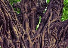 Fond en bois exotique d'arbre images stock