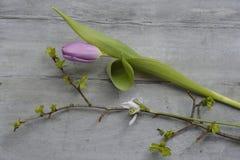 Fond en bois gris avec les tulipes blanches pourpres, la frontière de perce-neige et de crocus et l'espace vide de copie, décorat Photo libre de droits