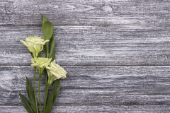 Fond en bois gris de fleurs blanches Rose rouge mariage Carte de voeux Le jour de la femme 8 mars Image libre de droits