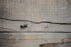 Fond en bois gris superficiel par les agents rustique Photo stock