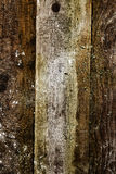 Fond en bois intéressant de texture Images libres de droits