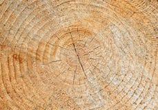 Fond en bois jaune-clair naturel de texture Plan rapproché en bois grunge de texture Photo stock