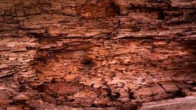 Fond en bois mangé par des termites, fond en bois Images libres de droits