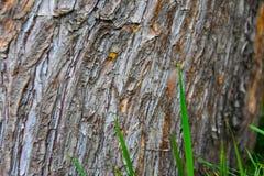 Fond en bois naturel en bois de texture en bois, beau naturel photos libres de droits