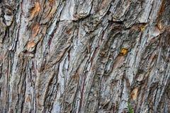 Fond en bois naturel en bois de texture en bois, beau naturel image stock