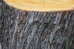 Fond en bois naturel en bois de texture en bois, beau naturel photographie stock