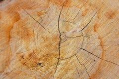 Fond en bois naturel en bois de texture en bois, beau naturel photographie stock libre de droits