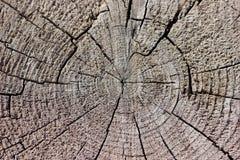 Fond en bois radial superficiel par les agents rustique de grain photo libre de droits