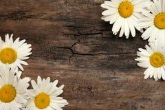 Fond en bois rustique de table de fleur de camomille Images libres de droits