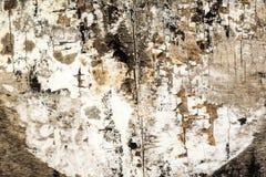 fond en bois sec de texture Images stock