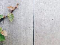 Fond en caoutchouc de figue Photographie stock