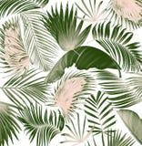 Fond en feuille de palmier d'arbre de mélange Photographie stock libre de droits
