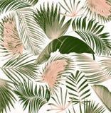 Fond en feuille de palmier d'arbre de mélange Image libre de droits