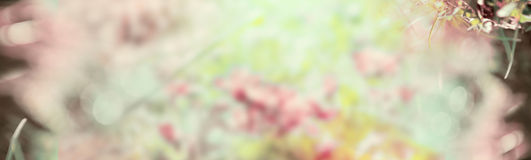Fond en pastel brouillé de nature, bannière pour le site Web Image stock